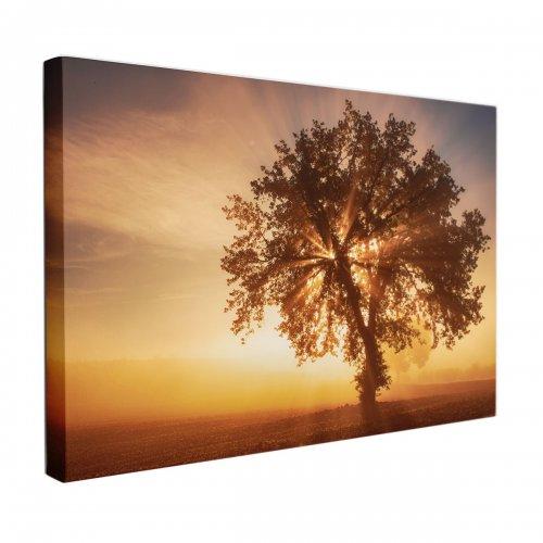 Obraz na płótnie CANVAS 120x80 A135 Samotne Drzewo